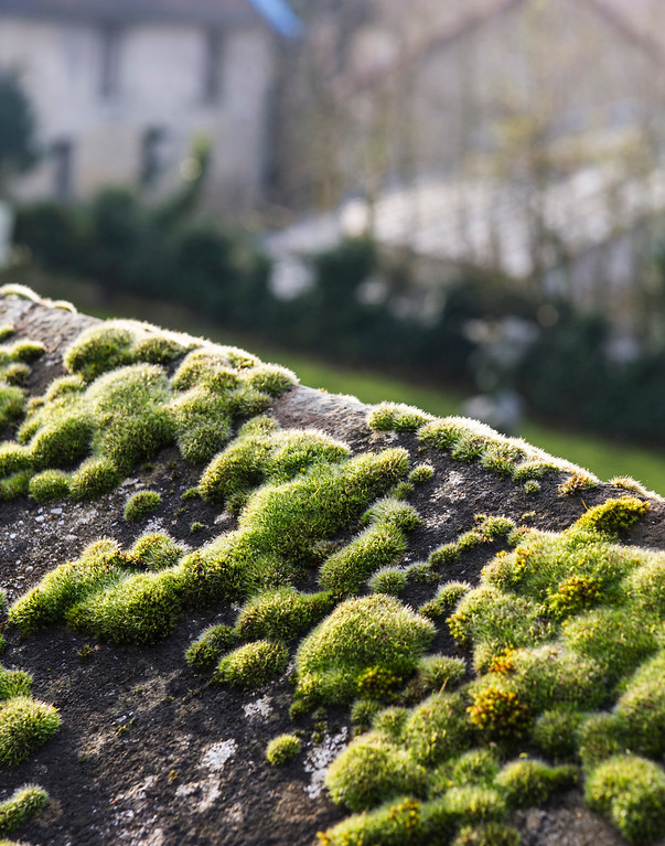 Moss on a stone wall overlooking the home of Charles Daubigny, famous artist who lived in Auvers sur Oise