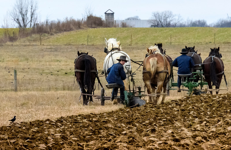 Spring Plowing has already begun, February 2015